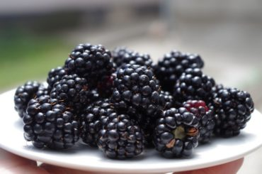 How_much_blackberries_are_in_1_cup